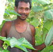 Janak Sahu: From Subsistence to Cash Crop Farming